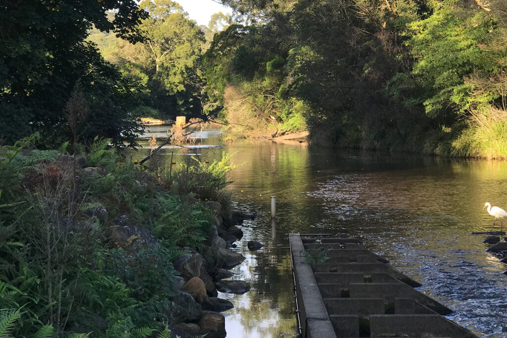 wyong creek scene